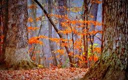 Floresta outonal Fotos de Stock