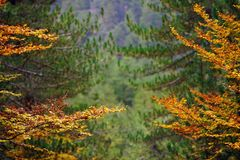 Floresta outonal imagem de stock