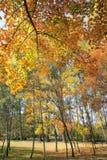 Floresta outonal Fotografia de Stock Royalty Free
