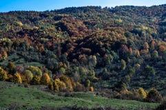 Floresta outonal Foto de Stock