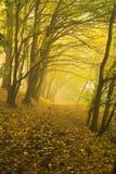 A floresta outonal Fotografia de Stock Royalty Free