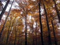 Floresta outonal Fotografia de Stock