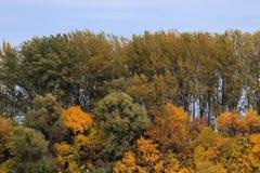 Floresta outonal Foto de Stock Royalty Free