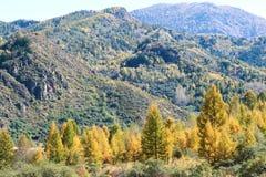 Floresta outonal da montanha Foto de Stock Royalty Free