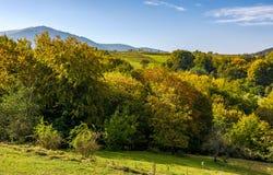 Floresta outonal em montes no campo montanhoso fotos de stock