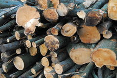 Floresta outonal inglesa Foto de Stock