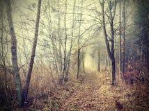 Floresta outonal misteriosa em um dia nevoento fotografia de stock royalty free