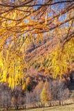 A floresta outonal mostra sua cor nos cumes Imagem de Stock