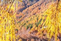 A floresta outonal mostra sua cor nos cumes Imagem de Stock Royalty Free
