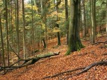 Floresta, outono Imagem de Stock Royalty Free