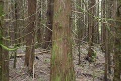 Floresta para as árvores Imagens de Stock