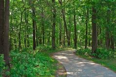 Floresta path2 Fotos de Stock