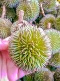 Floresta pequena dos durians Imagem de Stock