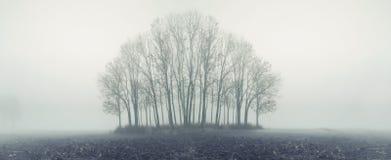 Floresta pequena no dia nevoento do outono foto de stock