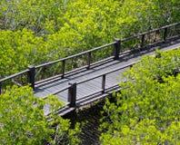 Floresta pequena transversal da noiva Imagem de Stock