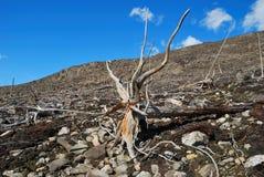 Floresta perdida Fotos de Stock Royalty Free