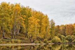 Floresta perto da água Foto de Stock