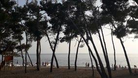 Floresta perto da praia em Montenegro fotografia de stock royalty free