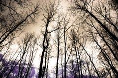 Floresta, perto de Deva, Romênia Fotos de Stock Royalty Free
