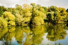 Floresta perto de um lago Imagens de Stock