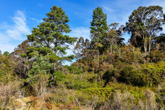 Floresta perto de Wentworth Falls, Austrália foto de stock