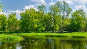 Floresta perto do lago imagem de stock