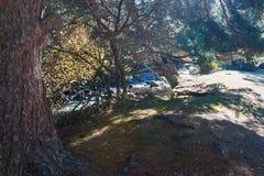 Floresta perto do rio Fotografia de Stock