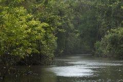 Floresta peruana imagem de stock royalty free