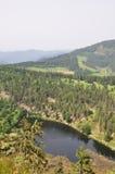 Floresta preta Foto de Stock