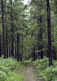 A floresta preta imagens de stock