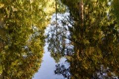 Floresta preta Fotos de Stock Royalty Free