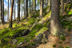 A floresta primitiva Fotos de Stock