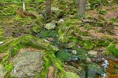 A floresta primitiva com The Creek - HDR Imagens de Stock