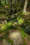A floresta primitiva com The Creek - HDR Imagem de Stock Royalty Free