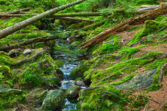 A floresta primitiva com The Creek - HDR Foto de Stock Royalty Free