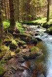 A floresta primitiva com The Creek - HDR Imagens de Stock Royalty Free