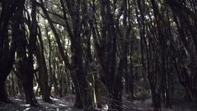 Floresta profunda filme