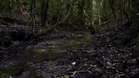 Floresta profunda video estoque