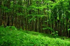 Floresta profunda Foto de Stock Royalty Free