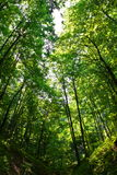Floresta profunda Fotografia de Stock Royalty Free