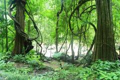 Floresta profunda Foto de Stock