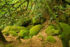 Floresta profunda em Brittany, France imagem de stock