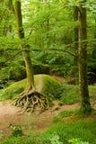 Floresta profunda em Brittany, France imagem de stock royalty free