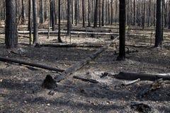 Floresta queimada Fotografia de Stock Royalty Free