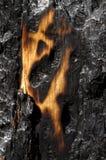 Floresta queimada Foto de Stock