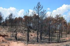 Floresta queimada Imagem de Stock