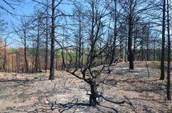 Floresta queimada Imagens de Stock
