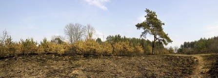 Floresta queimada Fotografia de Stock