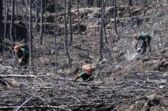 Floresta queimada Fotos de Stock Royalty Free