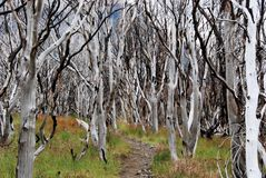 A floresta queimada carbonizou por árvores espectrais - Torres del Paine - Patagonia chileno Foto de Stock
